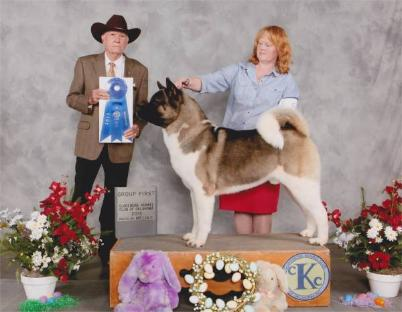 Braddock won BACK TO BACK Group1's in Claremore OK, March 2013!!!  So exciting!!!!  Judge Mr Pete Dawkins (this was the second time Mr Dawkins awarded Braddock at Group 1, the first time being in January 2013 in Starkville Ms).  BREEDER/OWNER HANDLER:  Lisa Coffey