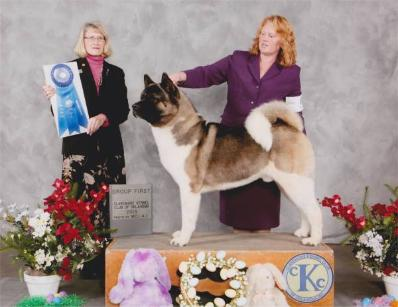 Braddock won BACK TO BACK Group 1st in Claremore Ok in March 2013!!!  This is the first day and judge is Mrs Nancy Simmons.  BREEDER/OWNER HANDLER:  Lisa Coffey