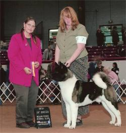 Best of Breed at 15 months of age, Breeder/Owner Handled by Lisa Coffey, Judge:  Cathy de la Garza